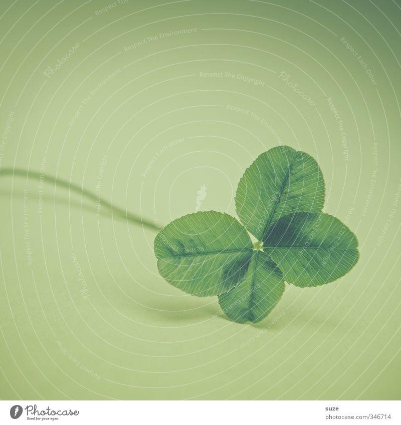 Reine Glückssache Lifestyle Pflanze Blatt Zeichen klein grün Vorfreude Erfolg vierblättrig Glücksklee Glücksbringer Wunsch Glücksspiel Lotterie Kleeblatt