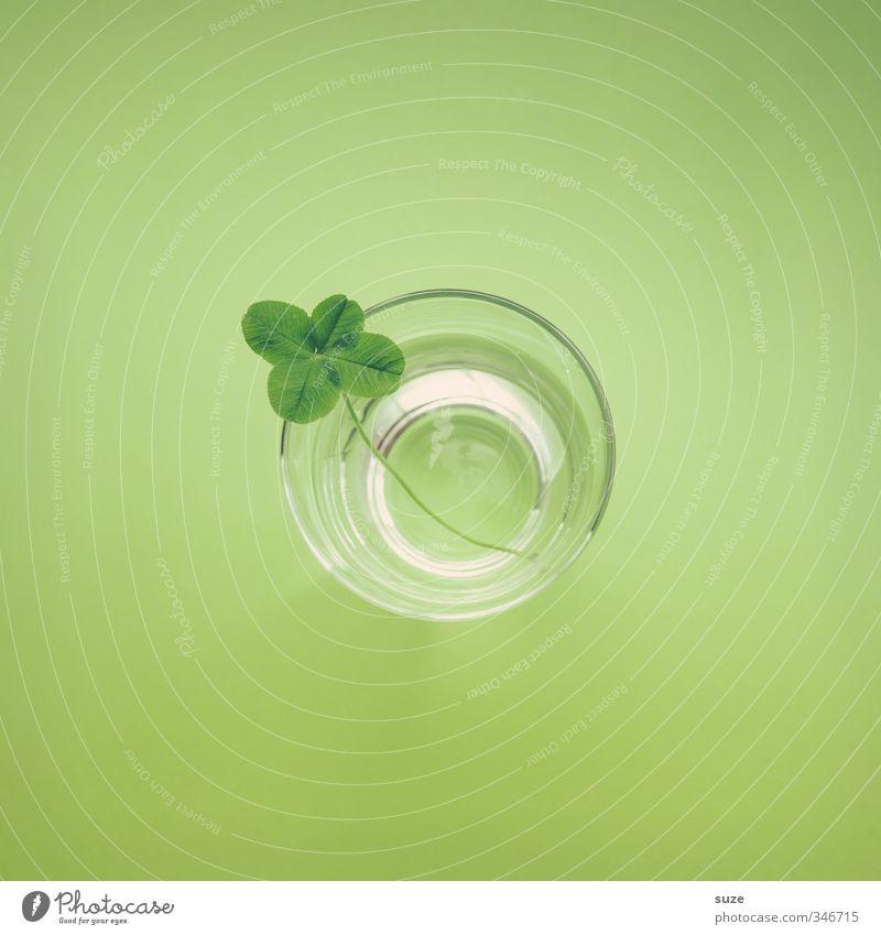 Glückswasser Getränk Glas Design Umwelt Wasser Blatt einfach Freundlichkeit klein natürlich niedlich rund saftig grün Frühlingsgefühle Durst Idee Kreativität