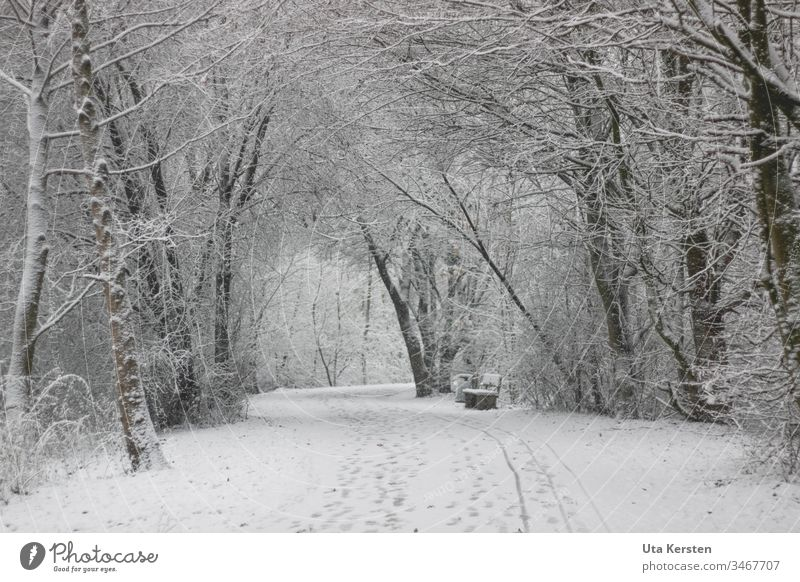 Weg im Winter mit Schnee trist weiß kalt Außenaufnahme Menschenleer Natur Baum Umwelt Landschaft Eis Gedeckte Farben Frost grau Klima Pflanze Wetter Einsamkeit