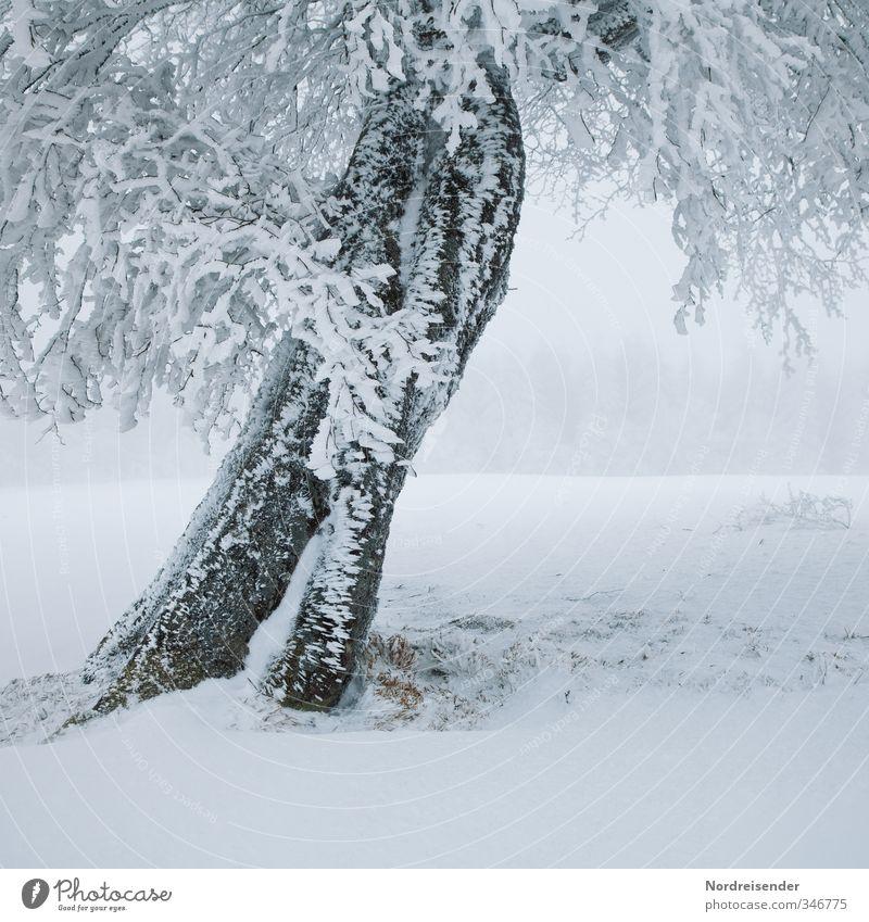 Eisig weiß Pflanze Baum Einsamkeit Landschaft ruhig Winter kalt Leben Schnee Eis Wetter Kraft Nebel Klima Frost