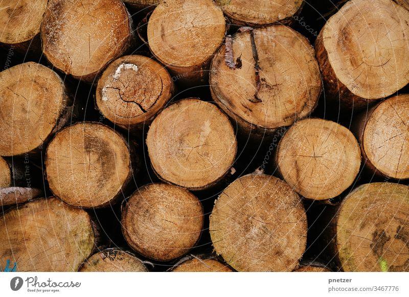 Achtung Holzwürmer Baum Stamm Gefällt fällen Wald Rohstoff frisch trocknen Brennholz Ofen Natur wachsen Stapel liegen Rinde Alterslinien Material Kreise Ast