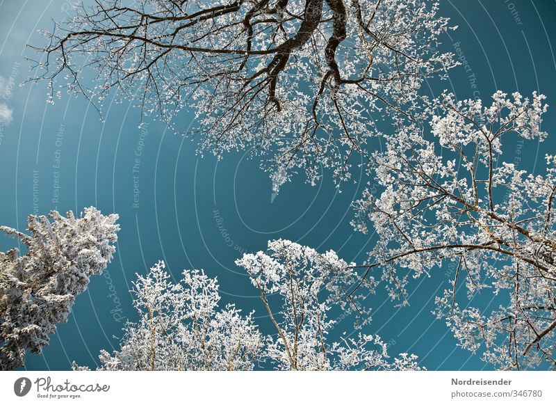 Total blau | mit Weißanteil Himmel Natur blau weiß Pflanze Baum Farbe Landschaft ruhig Winter Wald Schnee Leben Stimmung glänzend Klima