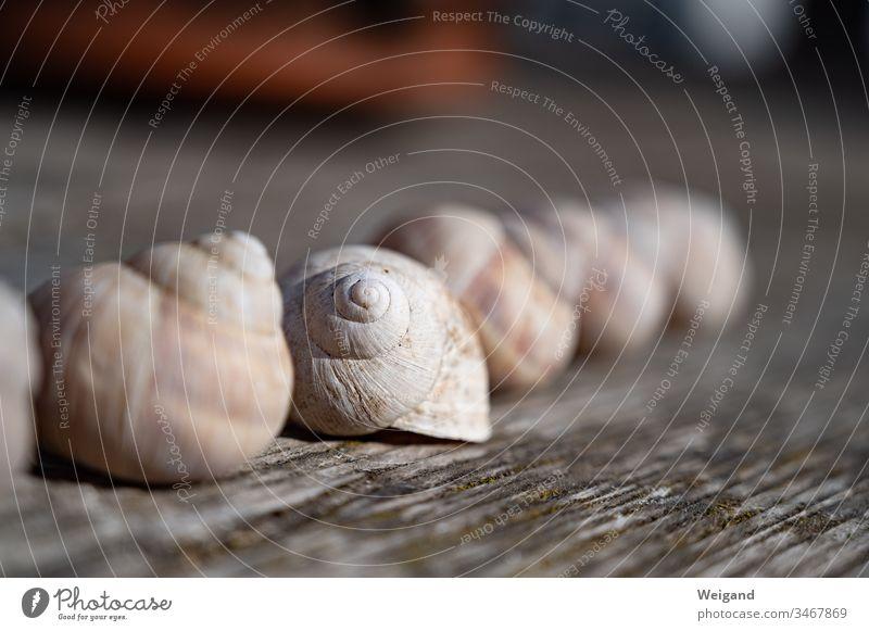 Schneckenhaus Meditation Spiritualität Ruhe Achtsamkeit Erholung Innenaufnahme Gelassenheit Kraft Yoga friedlich Ewigkeit