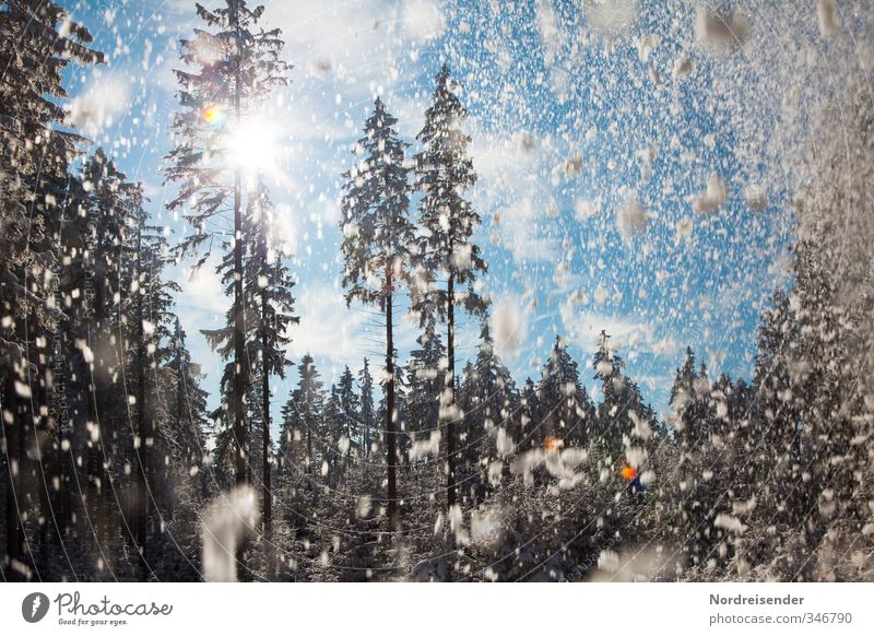 Schneekitsch Ferien & Urlaub & Reisen Baum Erholung Freude Winter Wald Leben Stimmung Schneefall Freizeit & Hobby Fröhlichkeit Klima Schönes Wetter