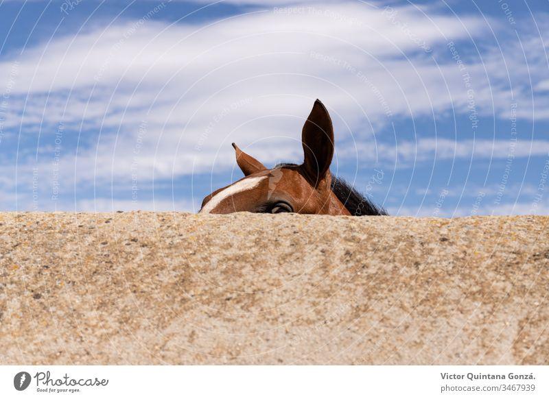 Pferdeohren hinter der Wand agrar landwirtschaftlich Tier Hinterwälder bukolisch Kavallerie Colt Landschaft wüst Ohren Europa Schönwetter Ackerland schnell