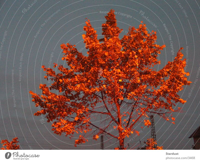 Burning Tree Baum Blatt Dämmerung rot Abend Lampe