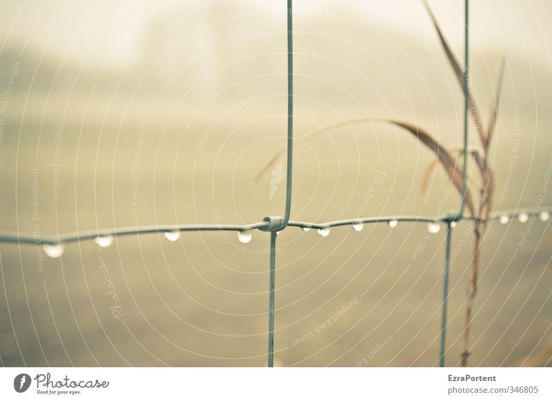 zwölf sind`s Natur Landschaft Wasser Wassertropfen Herbst Klima Wetter Regen Pflanze Gras Wiese Feld Metall hängen braun gelb viele aufgereiht Zaun Wildzaun 12