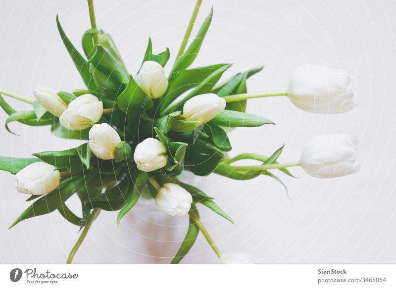 Blumenstrauß aus weißen Tulpen in einer Vase vereinzelt Hintergrund Tag Frühling Natur grün schön Mütter Raum Haufen Schönheit Geschenk geblümt Pflanze Kopie