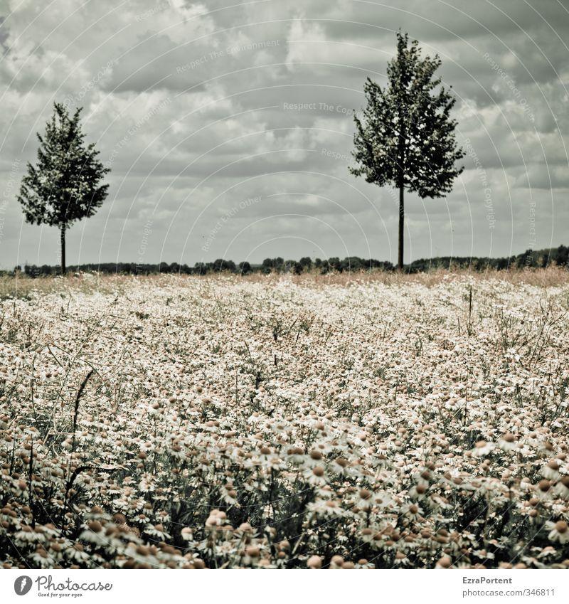 Ausblick Himmel Natur grün weiß Sommer Pflanze Baum Landschaft Blume Wolken Umwelt gelb Wiese Frühling klein Wetter