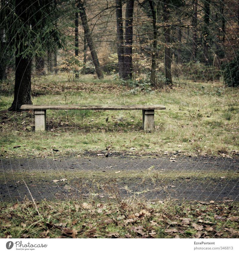 Rast Natur grün Pflanze Baum Einsamkeit Landschaft Erholung ruhig Wald Umwelt dunkel Herbst Gras Traurigkeit Wege & Pfade Holz