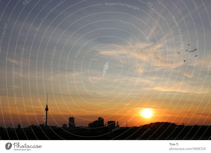 Berlin Sonnenuntergang Skyline Vögel Sonnenlicht dächer Stadt Hauptstadt Stadtzentrum Außenaufnahme Farbfoto Menschenleer Dämmerung Abend Haus Himmel