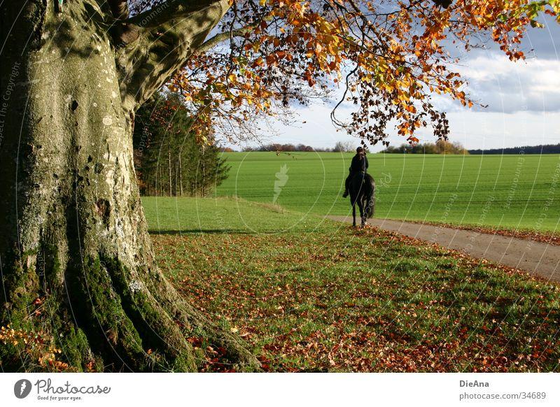 auf und davon Baum Blatt Berge u. Gebirge Herbst Bewegung Schönes Wetter genießen Hügel Oktober Reiter Schwäbische Alb