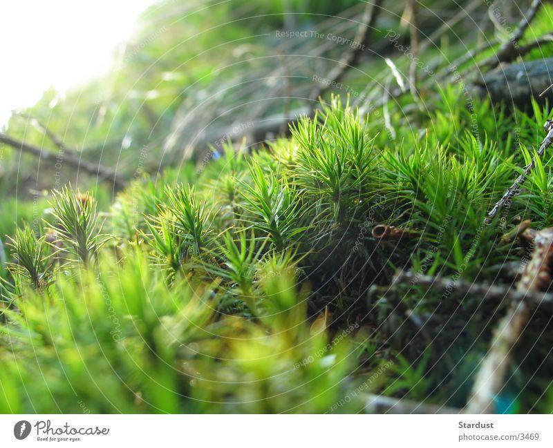 Grasgeflüster 2 Wald Gras Moos