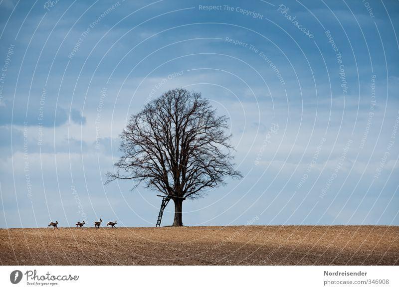 Jagdszene ohne Jäger Himmel Herbst Schönes Wetter Baum Feld Tier Wildtier Tiergruppe Tierfamilie rennen laufen springen blau braun Bewegung Freiheit bedrohlich