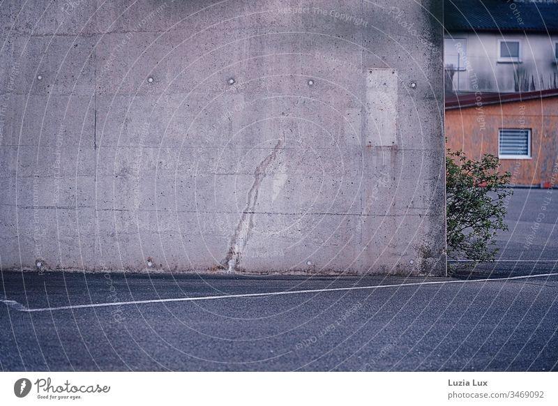 ein tapferer Baum, zartes Grün an Beton Stadt Gebäude Mauer Wand Hof trist Sichtbeton grün Strauch Hinterhof grau düster Frühling