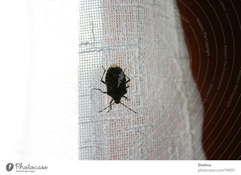 The unknown bug fremd Feindschaft Insekt Vorhang Fensterrahmen Haus obskur Käfer anonym Makroaufnahme hässlich insect window inside Innenaufnahme