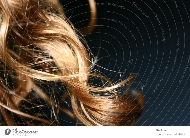Die Locke Locken blond Wellen lang Frau curls Naturlocken Makroaufnahme Haare & Frisuren