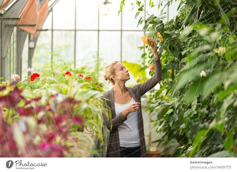 Floristinnen, die im Gewächshaus arbeiten. Gartenarbeit Blumenhändler Frau Gärtner grün Pflanze Natur jung schön Menschen Erwachsener Arbeit Dame Blüte Mädchen