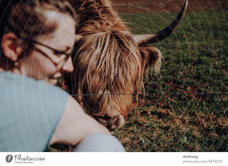 Eine junge Frau freut sich, weil das schottische Hochlandrind, oder einfach eine Kuh, das Futter gefressen hat, was sie ihr gegeben hat Hand niedlich schön