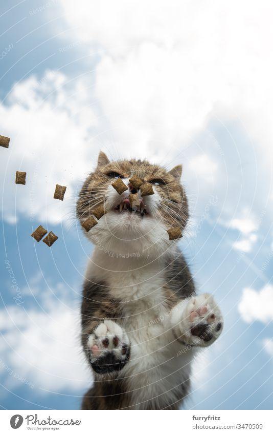 Katze frisst Leckerchen auf einem Glastisch unter freiem Himmel Textfreiraum Unteransicht Wolkenlandschaft sonnig Sonnenlicht Sommer im Freien Pfote haarig