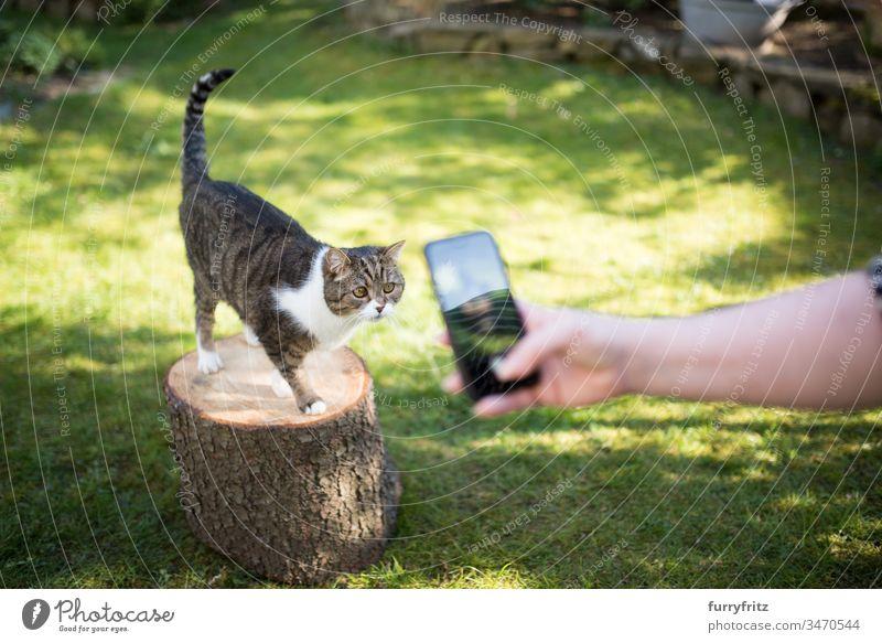 Katze wird im Garten mit einem Smartphone für social media fotografiert Fotografieren soziale Netzwerke Blick niedlich fluffig Fell Katzenbaby Langhaarige Katze