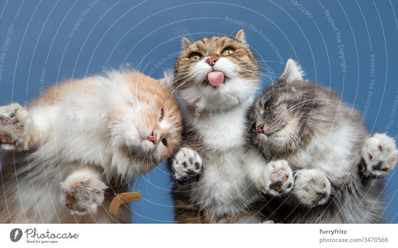 drei Katzen schlecken Leckerchen von einer Scheibe Unteransicht Himmel blau sonnig Sonnenlicht Sommer im Freien Pfote haarig Zehenbohnen Haustiere Tierzunge