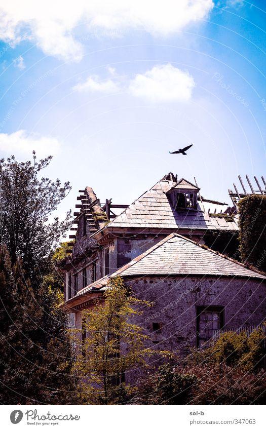 Natur blau alt grün Sommer Pflanze Baum Tier Wolken Haus Fenster Tod Freiheit Garten Vogel fliegen