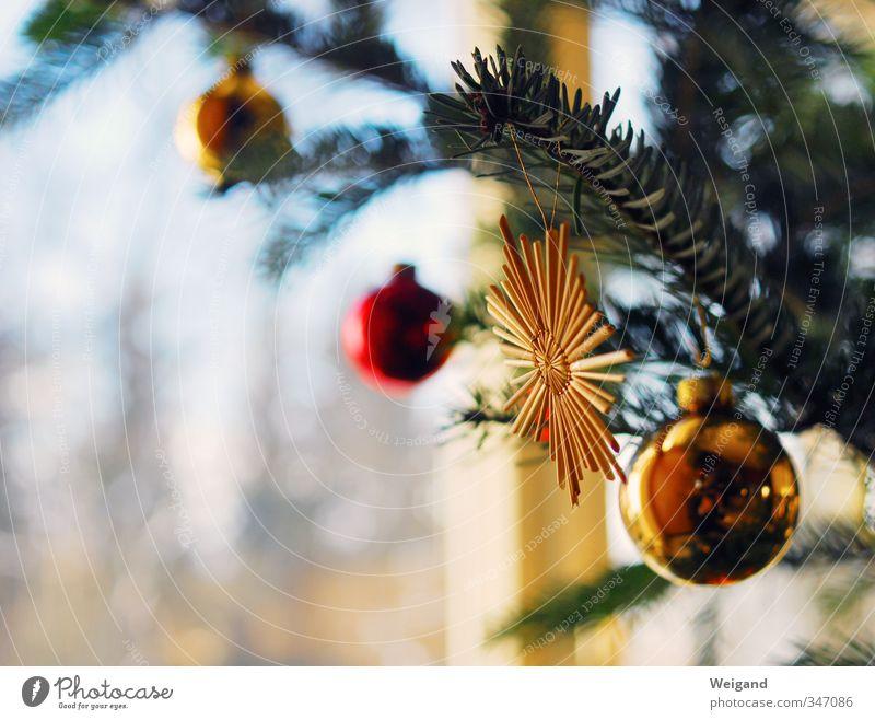 Sternenbaum Stil Wohnung Wohnzimmer Feste & Feiern gold rot Weihnachten & Advent Weihnachtsbaum Christbaumkugel Stern (Symbol) Kugel singen weihnachtslied