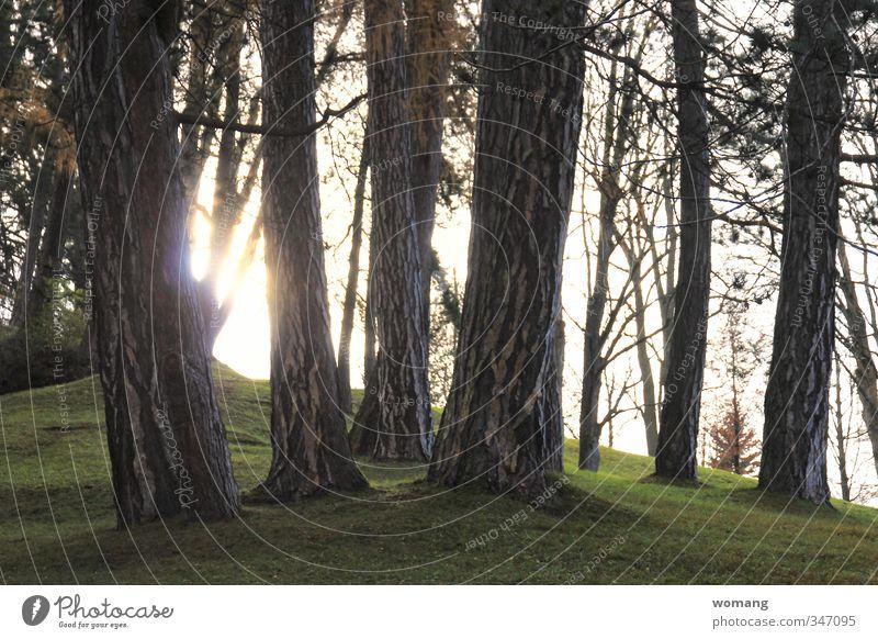 holz im Boden Natur Pflanze Erde Sonne Sonnenlicht Herbst Baum Gras Park dunkel hell grau grün Gelassenheit Wald Farbfoto Außenaufnahme Menschenleer