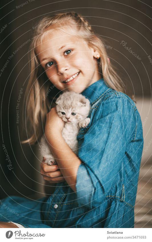 Mädchen umarmt und spielt ein kleines britisches Kätzchen Porträt schön Kaukasier Schönheit hübsch blau Frau Model heiter Atelier wenig Kleid attraktiv