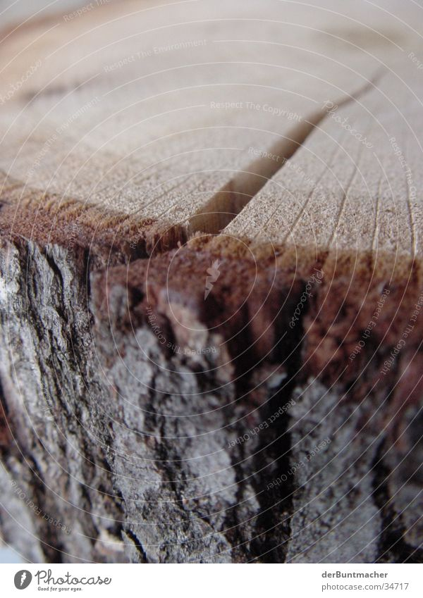 Holz Ist! Baum Baumstamm Spalte Baumrinde Faser Jahresringe