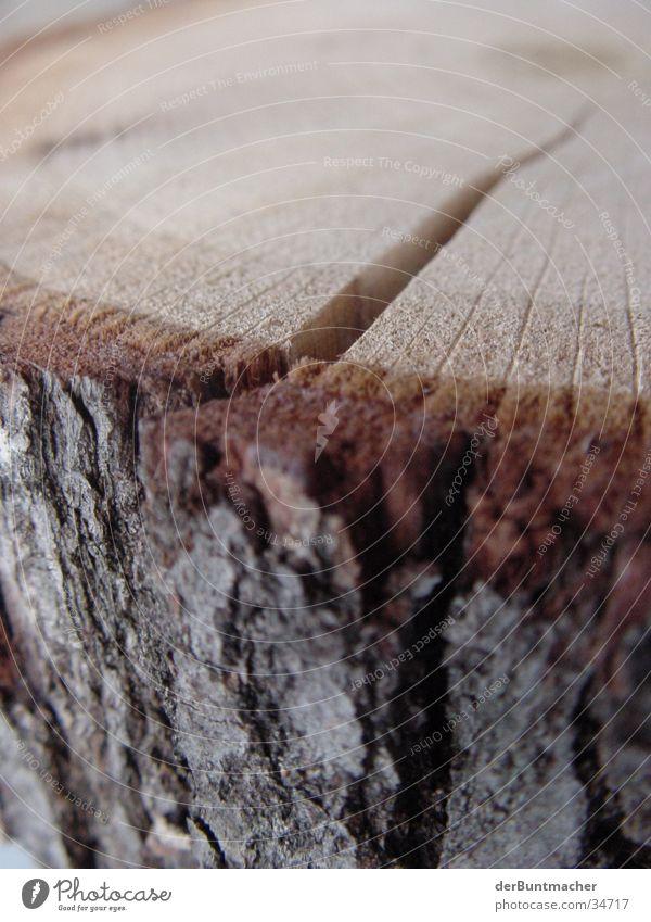 Holz Ist! Baum Holz Baumstamm Spalte Baumrinde Faser Jahresringe