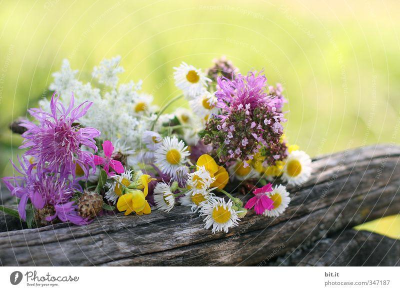 Wiesenblumen Ferien & Urlaub & Reisen Tourismus Dekoration & Verzierung Feste & Feiern Valentinstag Muttertag Umwelt Natur Pflanze Frühling Sommer Garten Park