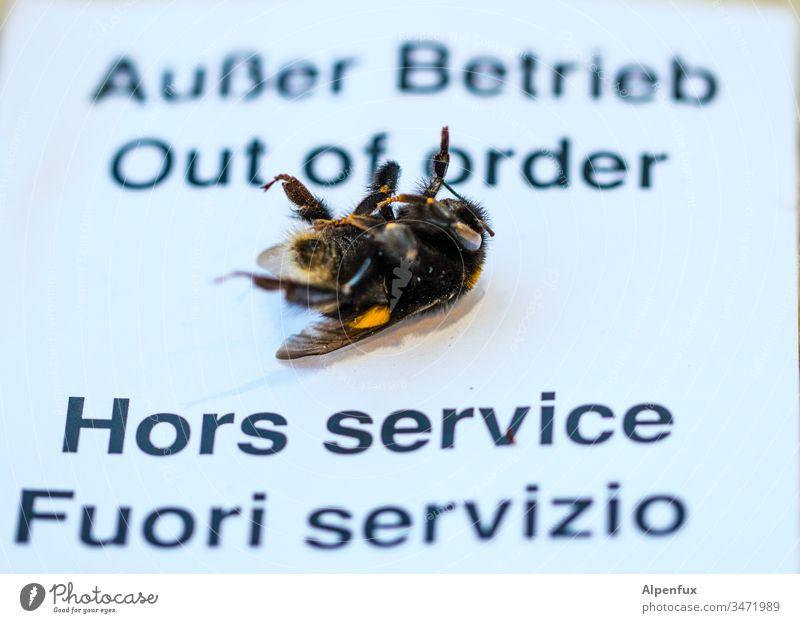 Tod eines Sammlungsreisenden Bienensterben Farbfoto Makroaufnahme Insekt Honigbiene Natur Hummel Nahaufnahme Detailaufnahme außer Betrieb Tier