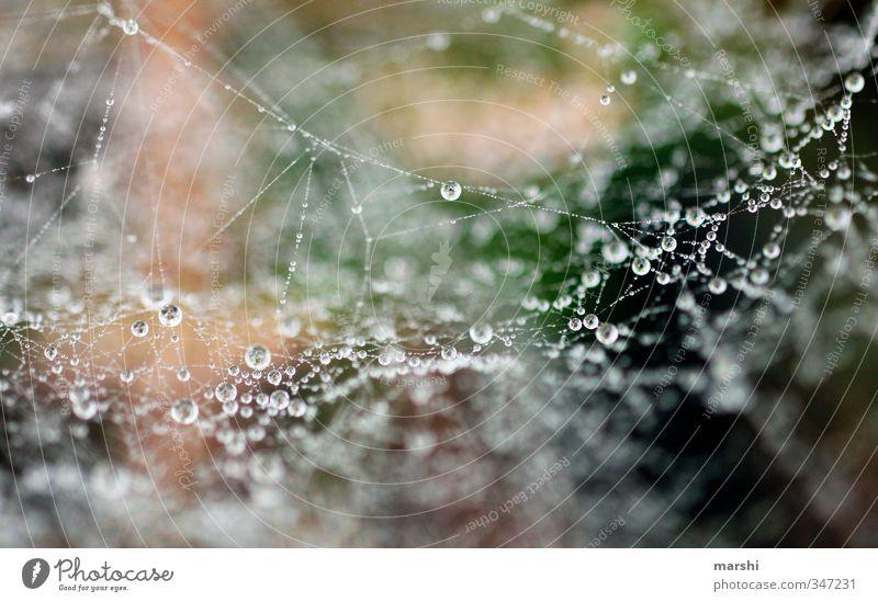 MorgenTau Natur Pflanze Herbst Winter Wetter Gras braun grün Wassertropfen Spinnennetz glänzend Farbfoto Außenaufnahme Nahaufnahme Detailaufnahme Makroaufnahme