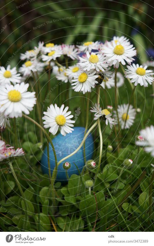 Vorfreude auf Ostern Osterei Wiese Gänseblümchen Eier suchen Ostersonntag Ritual Brauch Kinderspaß christliches Fest Versteck Gras grün blau