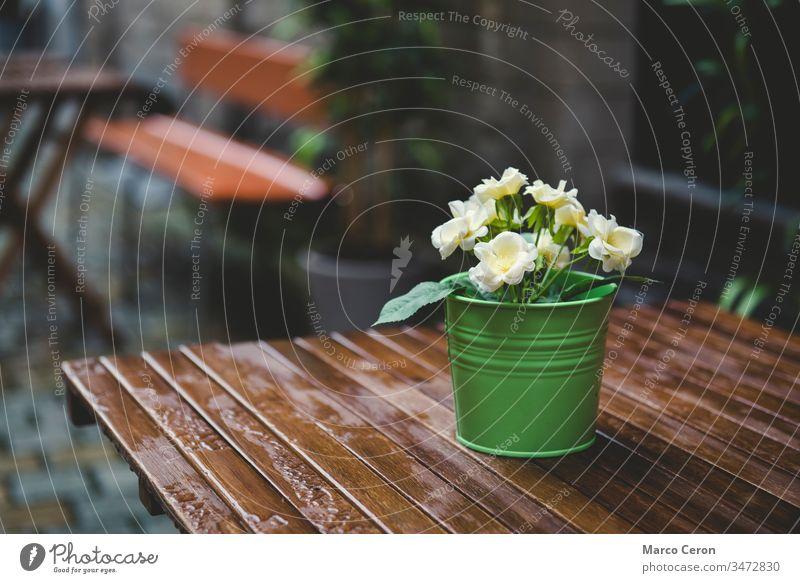 grüner Topf mit gelben Blumen auf einem nassen Holztisch Hintergrund schön Großstadt cool Tag Dekoration & Verzierung frisch Garten Blatt Licht natürlich Natur