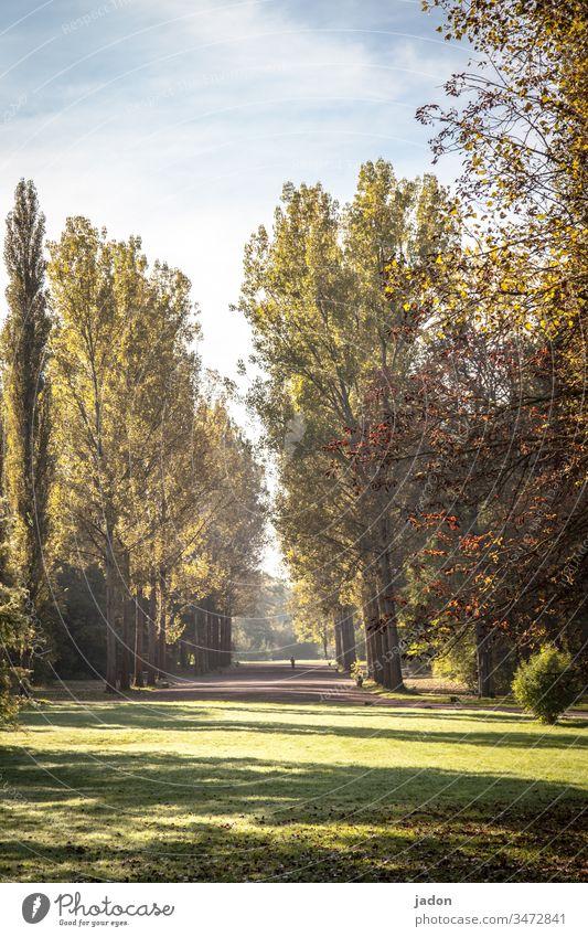 park, fast menschenleer, distanzgebot. Park Baum Natur grün Herbst Menschenleer Umwelt Außenaufnahme abstand halten distanzieren Farbfoto Abstand Epidemie