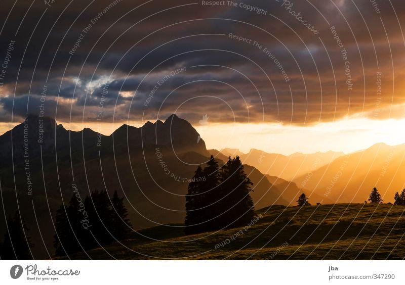 499 - Abendstimmung Natur Sommer Erholung Landschaft ruhig schwarz Berge u. Gebirge Wiese Herbst Freiheit Horizont orange Zufriedenheit Warmherzigkeit Schönes Wetter Gipfel