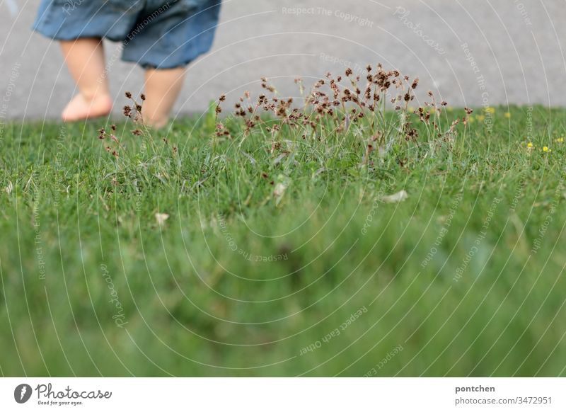 Kind geht abwärts über eine Wiese mit nackten Beinen. Man sieht nur  Teile des Unterkörpers kleinkind beine laufen gehen füße körperteil Gräser wiese gras