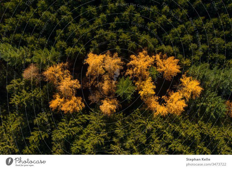 Luftperspektive des Herbstwaldes mit grün und gelb gefärbten Bäumen. Antenne Wald fallen Dröhnen Hubschrauber Kontrast Natur reisen malerisch schön natürlich