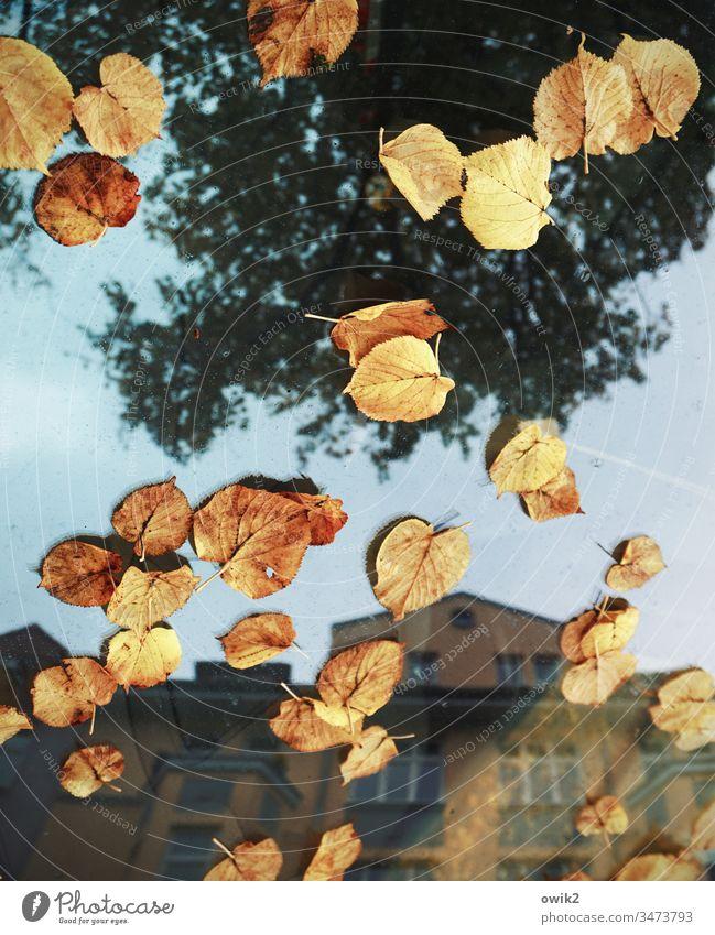Vorläufig Herbst Herbstlaub Blätter Laubblätter PKW Fahrzeug Frontscheibe Glas Spiegelung Reflexion & Spiegelung Stadt Haus Baum Himmel Außenaufnahme Straße