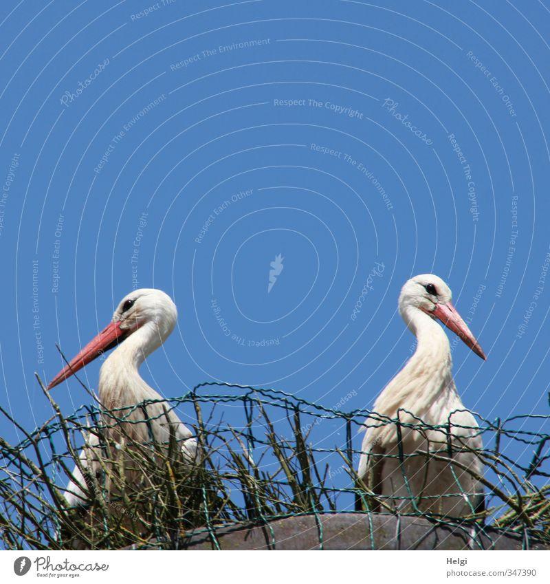 total blau | Meinungsverschiedenheiten... Natur blau schön weiß Sommer rot Tier Leben grau natürlich außergewöhnlich Vogel Wildtier authentisch warten stehen