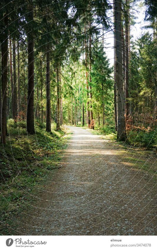 dunkler Waldweg ins Licht führend Weg Baum Wege & Pfade Menschenleer Natur Außenaufnahme Landschaft ruhig friedlich Nadelbaum Nadelwald Richtung