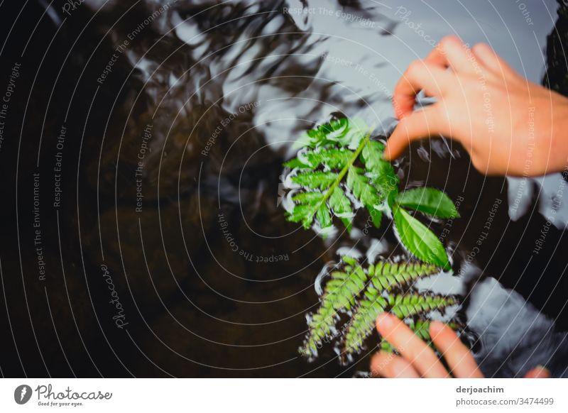 Kinderhände legen grüne Blätter in einen leicht fließenten Fluss. Außenaufnahme Farbfoto Blatt Natur Menschenleer natürlich Nahaufnahme schön Pflanze Wachstum
