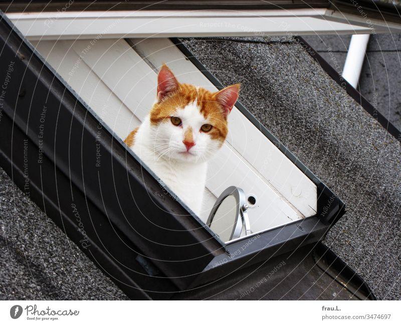 Lieber einen Kater im Badezimmer als denselben auf dem Dach. Katze Fenster Dachfenster Spiegel Kosmetikspiegel Außenaufnahme