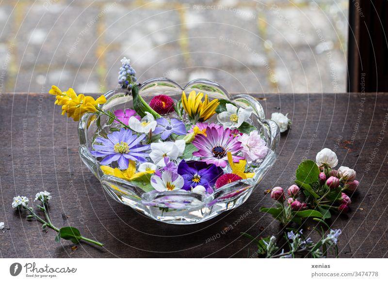 hier riecht´s doch nach... frühlinghaftes Potpourrie aus Blüten in einer Wasserschale steht am Fenster Blumen Holztisch Anemone Glasschale Frühling Apfelblüte