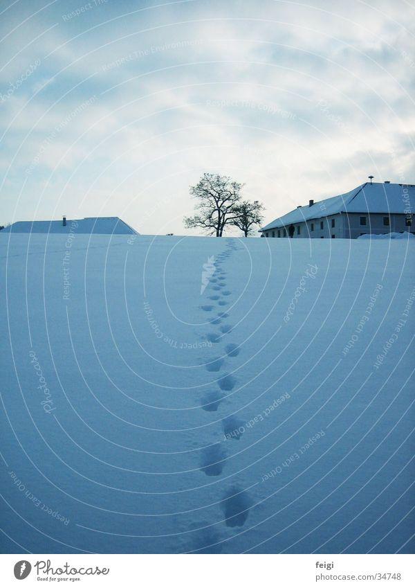 Spuren im Schnee Winter Baum Bauernhof Berge u. Gebirge Spaziergang