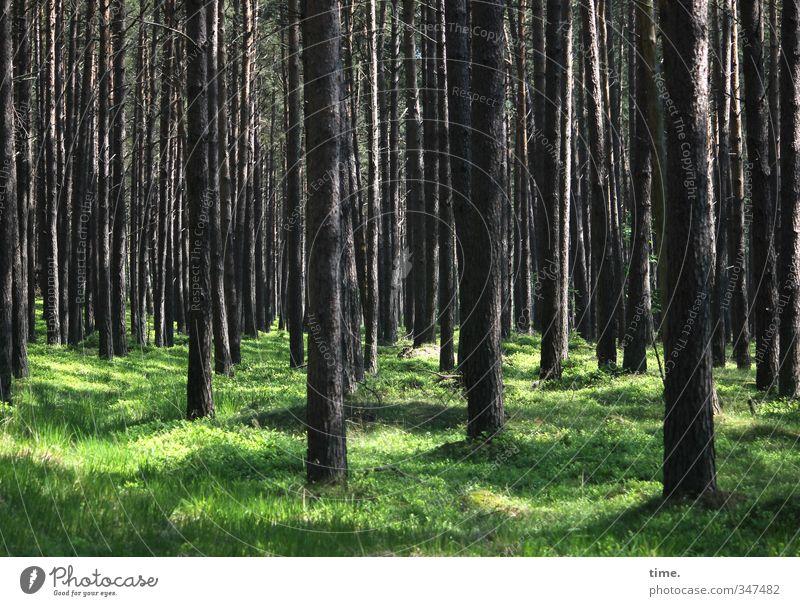 see some ... Umwelt Natur Landschaft Pflanze Schönes Wetter Baum Gras Moos Wildpflanze Wald natürlich Wahrheit Ehrlichkeit Zufriedenheit Partnerschaft