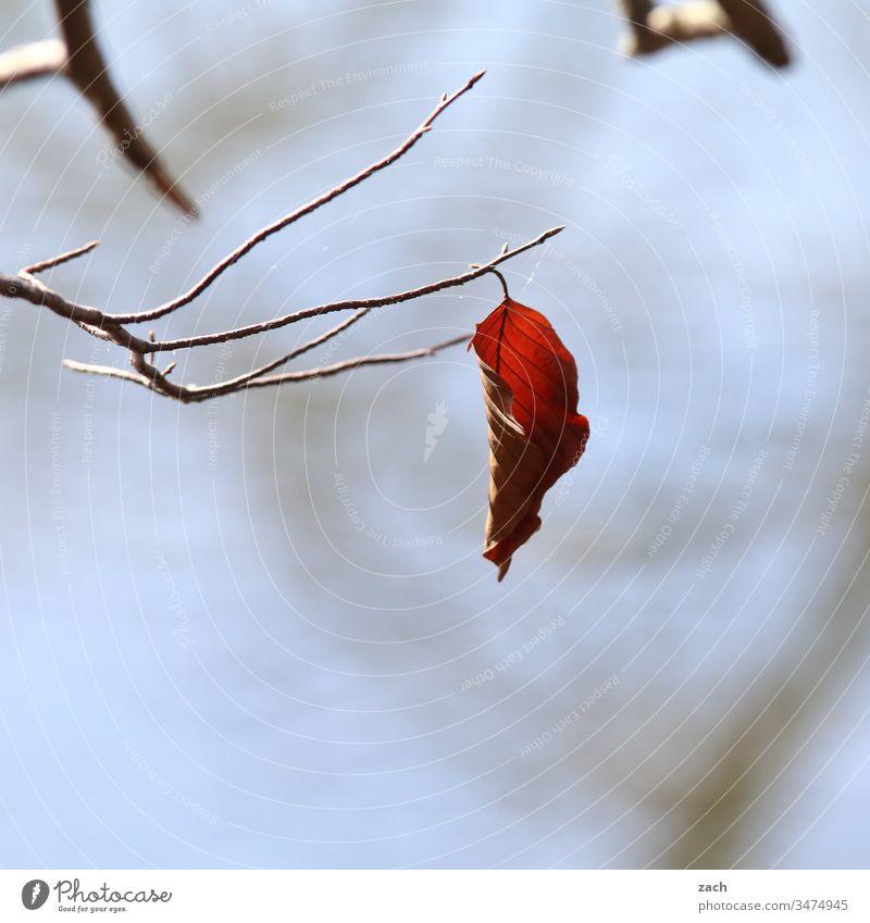 herbstlich verfärbtes Blatt häng an einem Ast Herbst Laub Herbstlaub See blau grau Natur Baum Herbstfärbung Zweige u. Äste Pflanze
